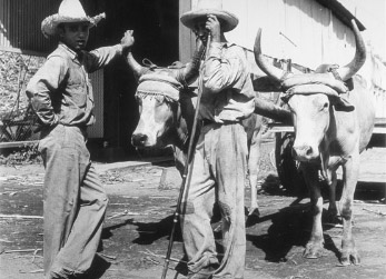all the pretty horses essay Free essay: all the pretty horses john grady is not your average cowboy all the pretty horses is not your typical coming-of-age story this is an honest.